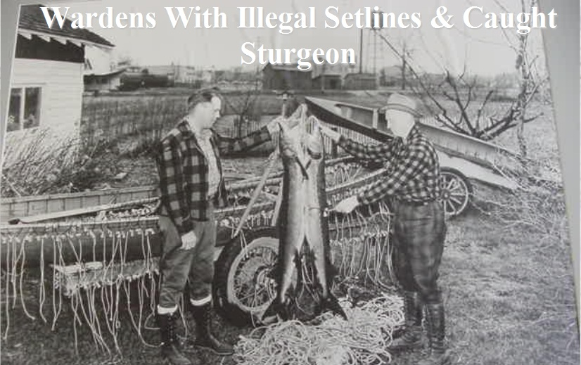 A History of the Wisconsin Lake Sturgeon