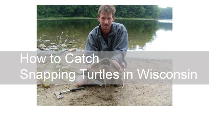 How to Catch Snapping Turtles in Wisconsin