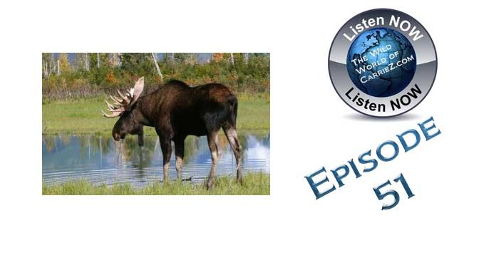 #HuntFishTravel 114 – How to Call in a Moose