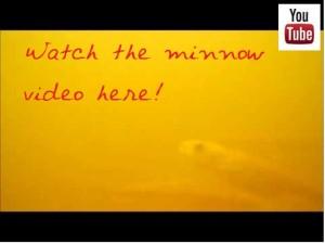 wi river minnows youtube