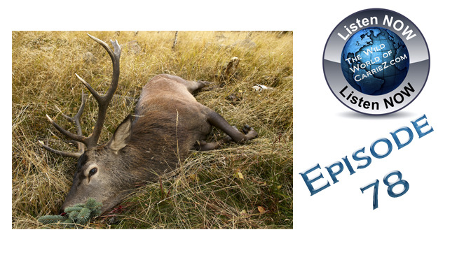 #HuntFishTravel  078 – Keeping Your Game Fresh after the Kill