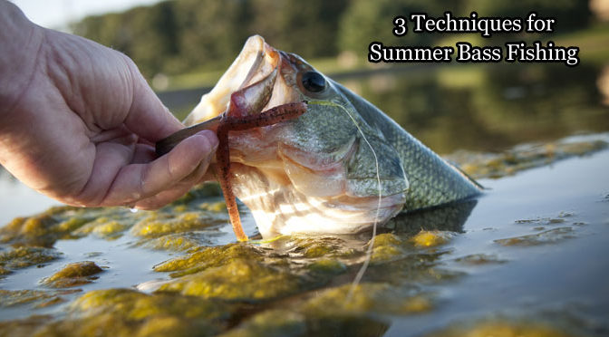 3 Techniques for Summer Bass Fishing